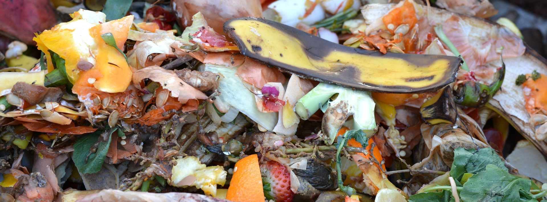 A colourful compost scrap heap