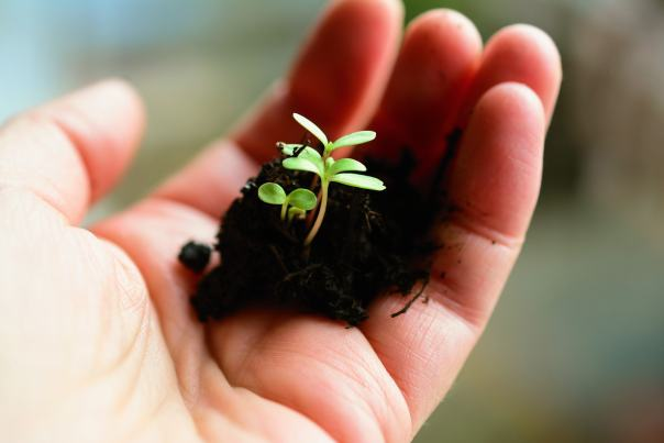 A hand holding a pile of dirt with a small plant coming out