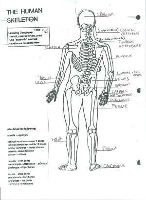 The Human Skeleton  MS CRAWLEY