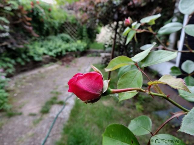Annelies blomma 04