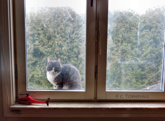 Maltes födelsedag katt 09