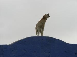 Peru Dec 2009 037