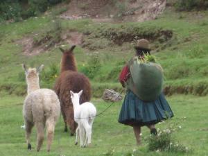 March 2012 Peru Trip 176
