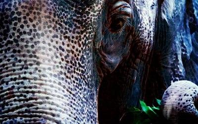 Elephants Song