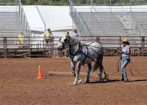 Draft horse logging demo 2015 by Randy Cockrell