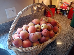 Peaches from my tree