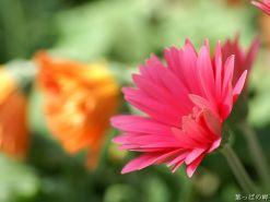 flower_photography_newflower125_1600