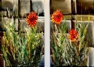 1 Flowers Diptyck IMG_6076psd