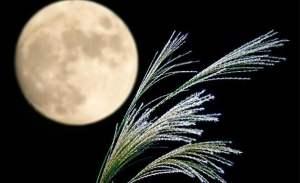 Tsukimi, observación de la luna