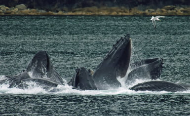 En Japón comen ballena