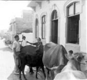 """1957. Abuela de Juan Cabrera, Nieves """"Nievita"""" para los vecinos, comprando leche a los vendedores ambulantes en la C/ Anzofé. Colección Juan Cabrera"""