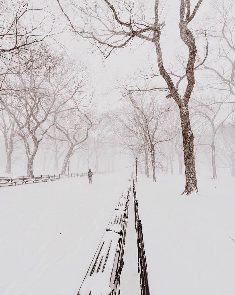 Central Park Foto: @MC_gutty