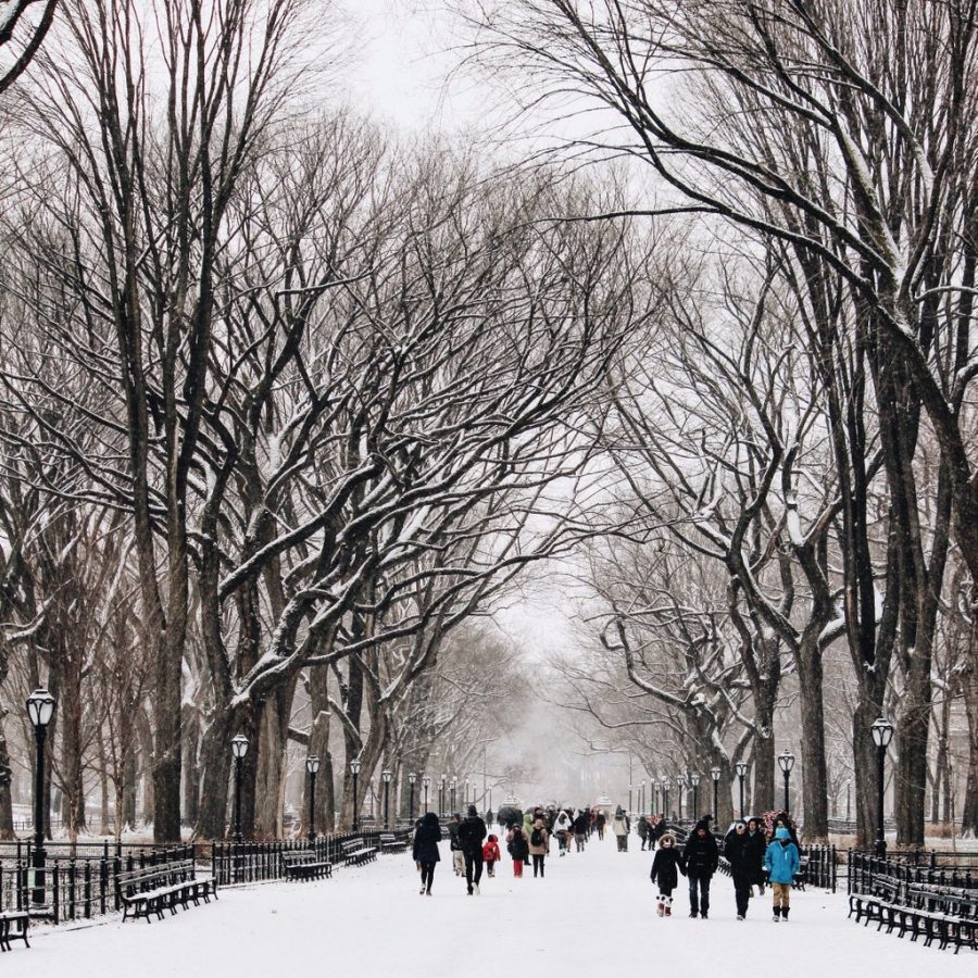 The Mall Central Park Foto: @TheEvelynNYC