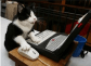 http://galleryhip.com/cat-using-the-computer.html