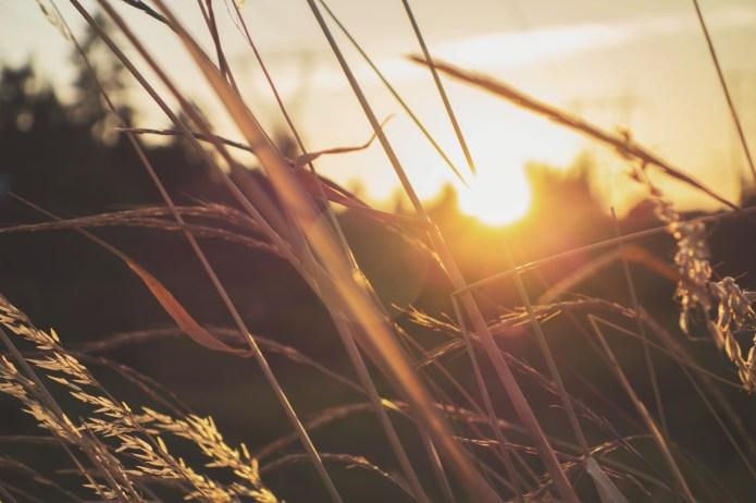 unsplash sun