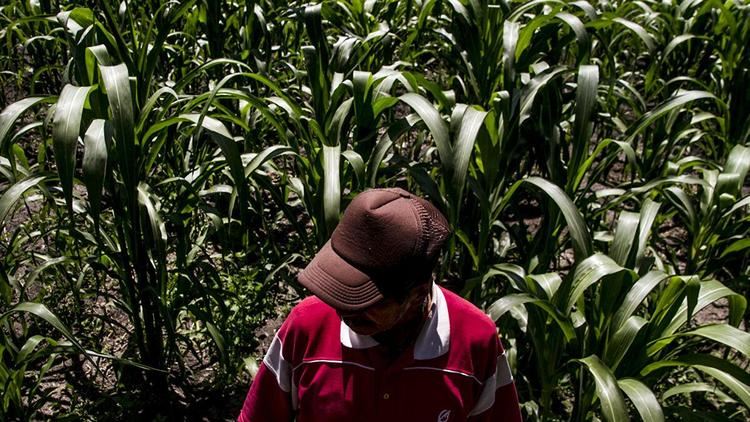 Latinoamérica: Las y los que producen alimentos