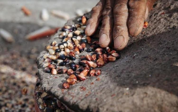 Argentina: Misiones ya tiene Ley de Protección de Semillas Nativas y Criollas