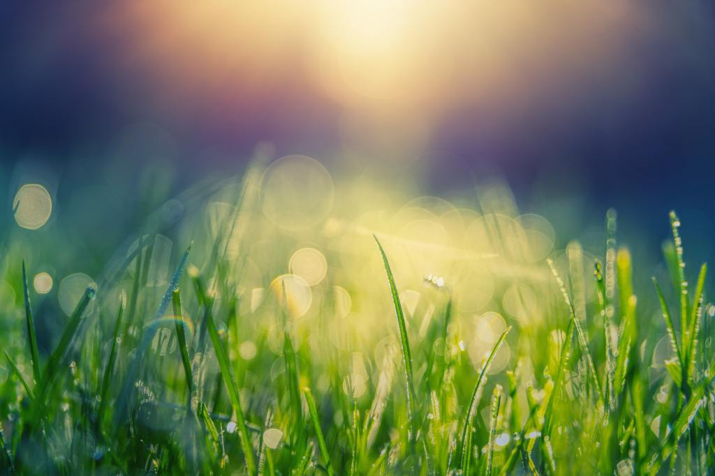 Sunlight reflecting off dewy green grass | Spring seasonal junction rebirth | Conscious Content.