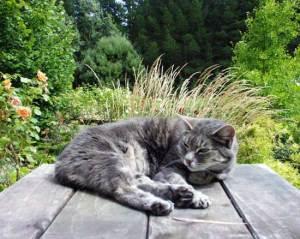 garden-table-cat