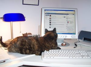 cat using facebook