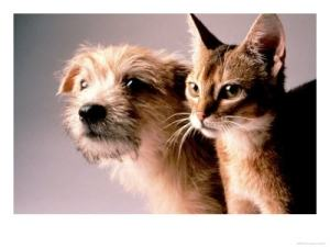 Probiotics for Cats and Dogs
