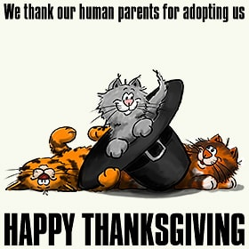 design_thanksgiving_cats_wh