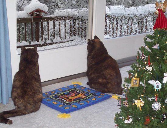 Christmas card large