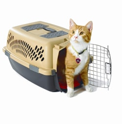 cat-in-carrier