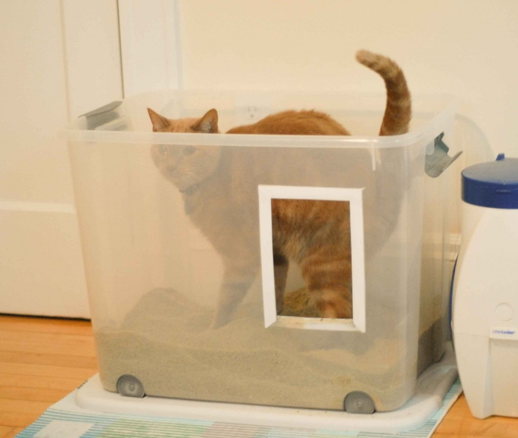 How To Make Your Cat Litter Not Smell