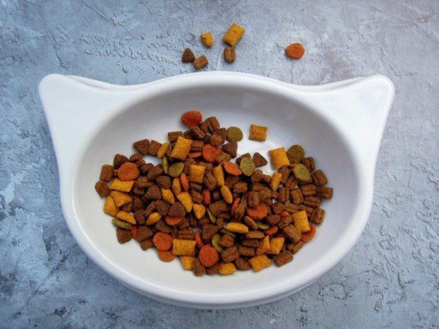 dry-cat-food