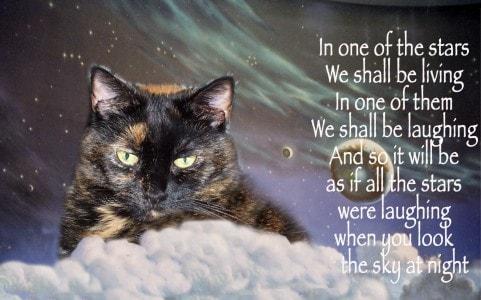 cat_sympathy_card