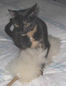 cat_feather_duster