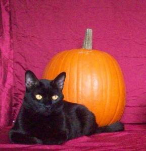 black_cat_with_pumpkin_Halloween