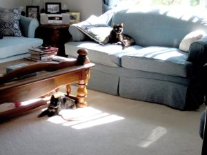 Ruby and Allegra living room