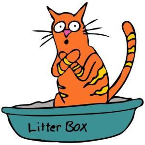 cat using litter box