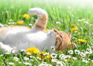 flower essences for cats