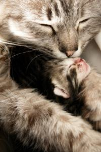 mother cat hugging her baby