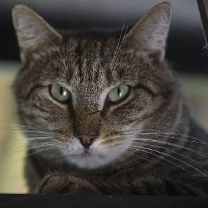 Santos Cat Assistance NY