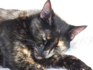 Allegra cat napping sleeping sunshine
