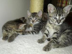 Fancy Cats Rescue Team