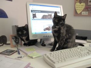 The Conscious Cat - Allegra and Ruby cats in front of computer