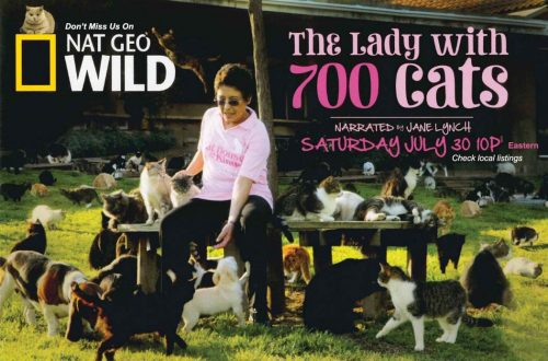 The lady with 700 cats National Geographic NatGeo Wild