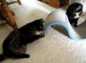 Neko Flies interactive cat toys