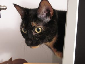 Allegra Ruby The Conscious Cat 2011 Petties