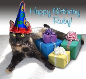 cat present birthday party hat