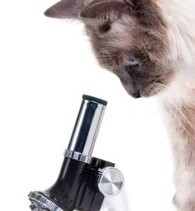 cat at microscope research