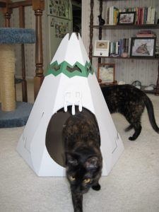 cats playing with cardboard cat house