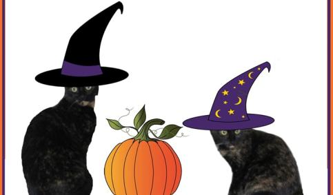 Halloween cats witches pumpkin