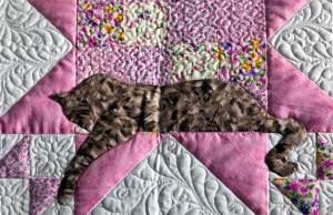 cat quilt design
