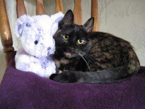 cat stuffed toy snuggling cute